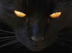 cat-2540940_1920