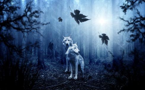 wolf-2864647_1920.jpg