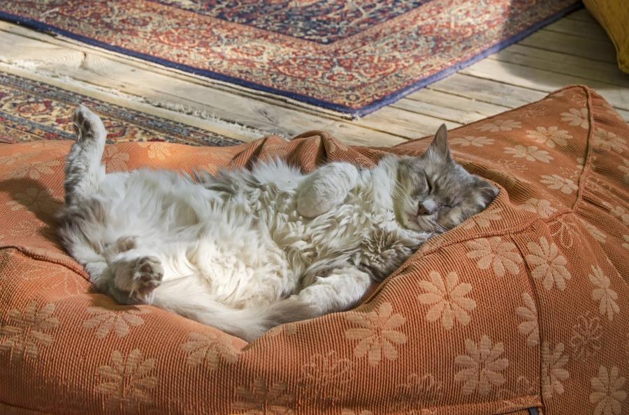 sleeping-cat-4764742_1920.jpg